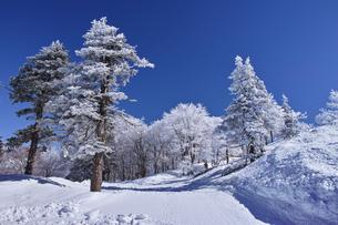 蔵王の樹氷の写真素材 [FYI01203415]
