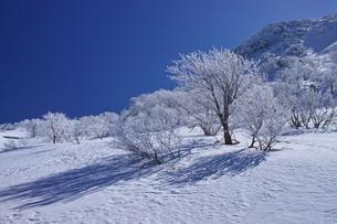蔵王の霧氷の写真素材 [FYI01203416]