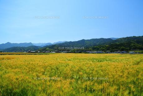 田舎の写真素材 [FYI01203540]
