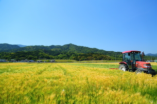 トラクターと裸麦の写真素材 [FYI01203541]