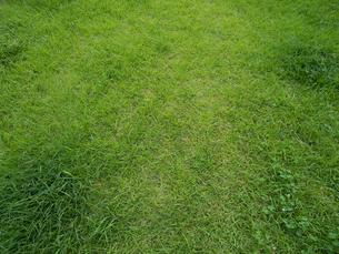 芝生の写真素材 [FYI01203612]