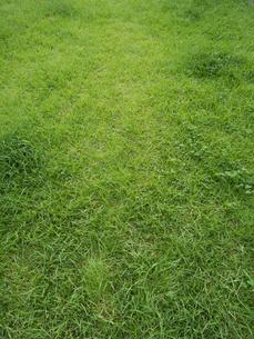 芝生の写真素材 [FYI01203613]