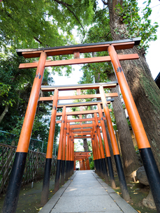 花園稲荷の鳥居 上野公園の写真素材 [FYI01203634]