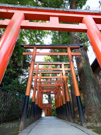 花園稲荷の鳥居 上野公園の写真素材 [FYI01203635]
