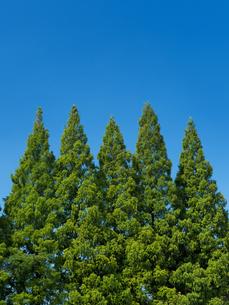 青空と樹木の写真素材 [FYI01203640]