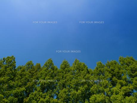 青空と樹木の写真素材 [FYI01203641]