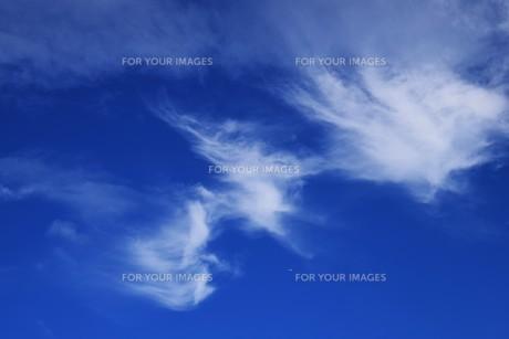 青い空と白い雲(夏から秋への序曲)・ 秋空ただよふ雲の一人となる 種田山頭火の写真素材 [FYI01203647]