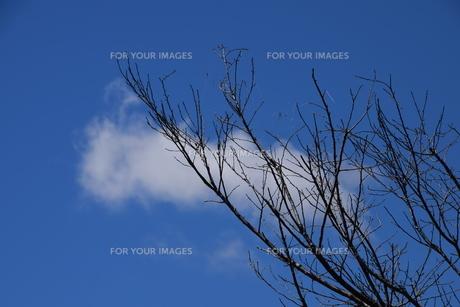 青い空と白い雲(夏から秋への序曲)・ 秋空ただよふ雲の一人となる 種田山頭火の写真素材 [FYI01203653]