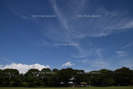 青い空と白い雲(夏から秋への序曲)・ 秋空ただよふ雲の一人となる 種田山頭火の写真素材 [FYI01203655]