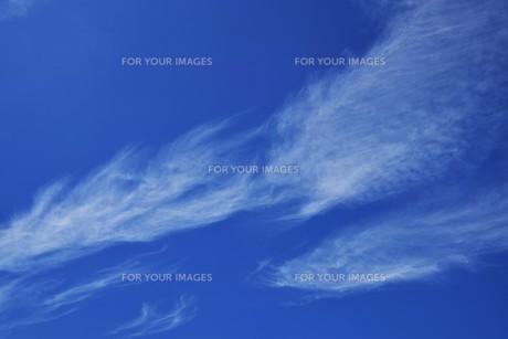 青い空と白い雲(夏から秋への序曲)・ 秋空ただよふ雲の一人となる 種田山頭火の写真素材 [FYI01203657]