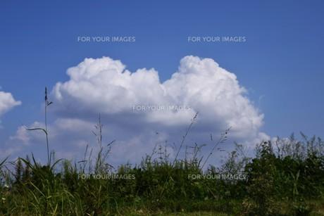 青い空と白い雲(夏から秋への序曲)・ 秋空ただよふ雲の一人となる 種田山頭火の写真素材 [FYI01203660]