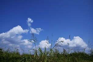 青い空と白い雲(夏から秋への序曲)・ 秋空ただよふ雲の一人となる 種田山頭火の写真素材 [FYI01203661]
