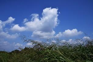 青い空と白い雲(夏から秋への序曲)・ 秋空ただよふ雲の一人となる 種田山頭火の写真素材 [FYI01203662]