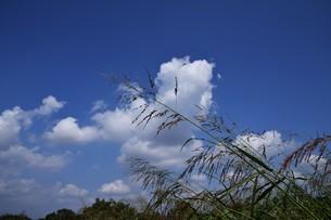 青い空と白い雲(夏から秋への序曲)・ 秋空ただよふ雲の一人となる 種田山頭火の写真素材 [FYI01203663]