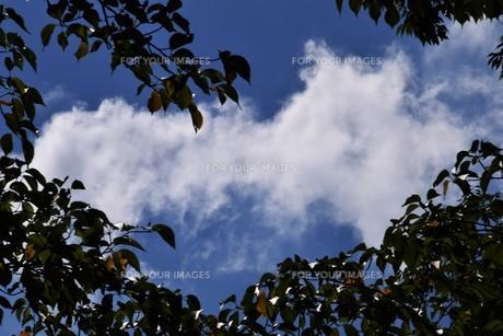 青い空と白い雲(夏から秋への序曲)・ 秋空ただよふ雲の一人となる 種田山頭火の写真素材 [FYI01203665]