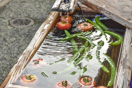 水で冷やしたキュウリとトマトの写真素材 [FYI01203791]