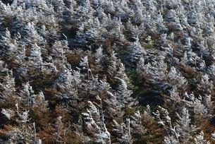 冬の気配の写真素材 [FYI01203944]