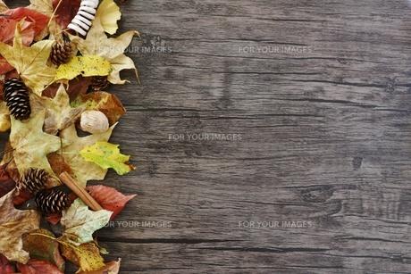落ち葉のフレームの写真素材 [FYI01203986]