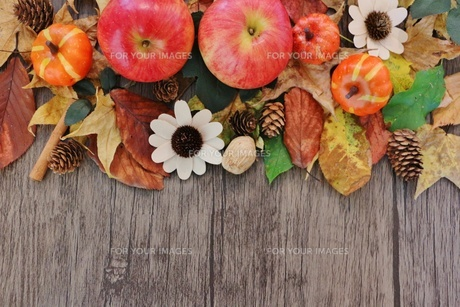秋のフレームの写真素材 [FYI01204028]