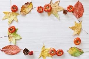 秋のフレームの写真素材 [FYI01204356]