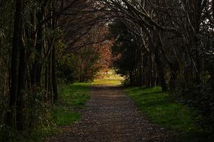 小道 森のトンネルの写真素材 [FYI01204413]