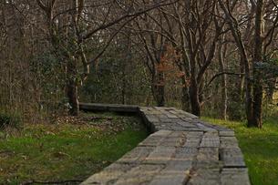 木の小道の写真素材 [FYI01204417]