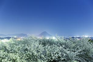 夜桜の写真素材 [FYI01204471]