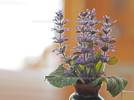 花瓶に生けられた綺麗な紫色の花の写真素材 [FYI01204556]