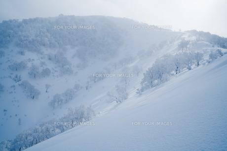 十勝の雪景色の写真素材 [FYI01204585]