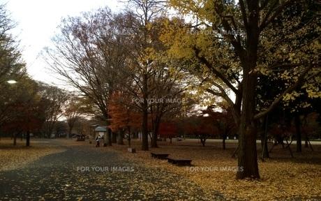 初冬の公園の写真素材 [FYI01204776]