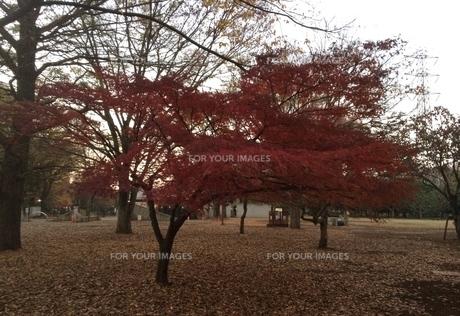 秋 autumn の写真素材 [FYI01204777]