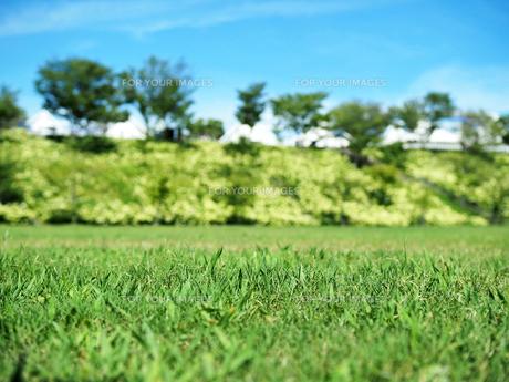綺麗に咲いているアジサイがある芝生広場の写真素材 [FYI01204885]