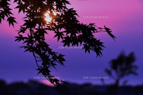夜明け(日の出)の光景 ・ 大自然の美しさに息をのむ瞬間…の写真素材 [FYI01204914]