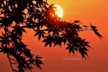 夜明け(日の出)の光景 ・ 大自然の美しさに息をのむ瞬間…の写真素材 [FYI01204915]