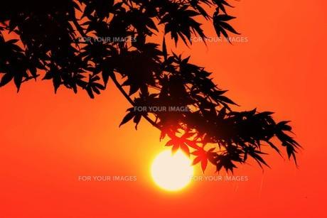夜明け(日の出)の光景 ・ 大自然の美しさに息をのむ瞬間…の写真素材 [FYI01204917]