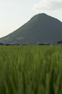田んぼと山の写真素材 [FYI01204971]