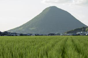 田んぼと山の写真素材 [FYI01204972]
