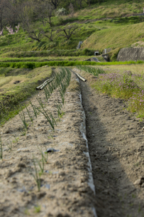 畑の写真素材 [FYI01204975]
