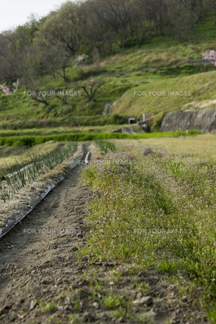 畑の写真素材 [FYI01204976]