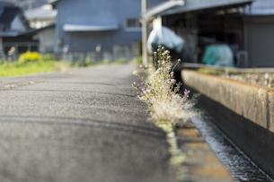 道端に咲く花の写真素材 [FYI01205028]