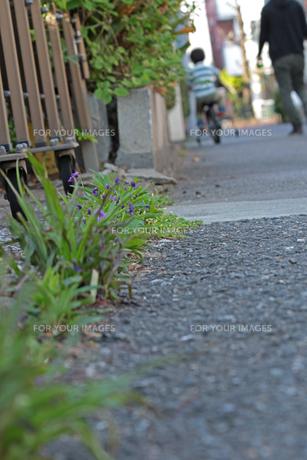 道端に花の写真素材 [FYI01205070]