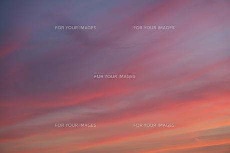 印象派の絵のような夕焼けの写真素材 [FYI01205302]