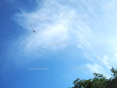 綺麗な青空とトンボ - 7月 夏 昼間 日本 兵庫県 三田市 -の写真素材 [FYI01205634]