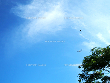 綺麗な青空とトンボ - 7月 夏 昼間 日本 兵庫県 三田市 -の写真素材 [FYI01205635]