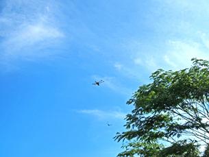 綺麗な青空とトンボ - 7月 夏 昼間 日本 兵庫県 三田市 -の写真素材 [FYI01205636]