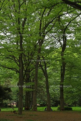 木の多い公園の写真素材 [FYI01205813]