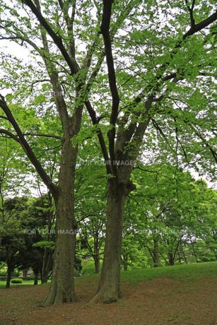 木の多い公園の写真素材 [FYI01205814]