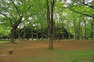 緑の多い公園の写真素材 [FYI01205815]