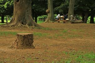 切り株 公園の写真素材 [FYI01205816]