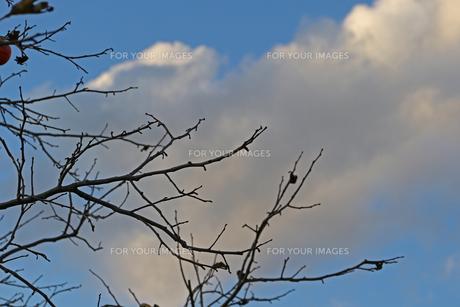 空と枝の写真素材 [FYI01205817]